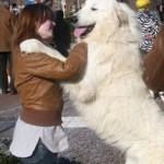 Pyreneese Berghond: Symfonie van Merode Isior